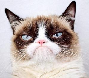 Grumpy Cat, cea mai iubită pisică de pe Internet, a murit