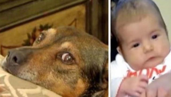 Câinele a început să urle şi să sară pe ei, în pat, agitat. Când s-au dus în camera copilului, şoc!