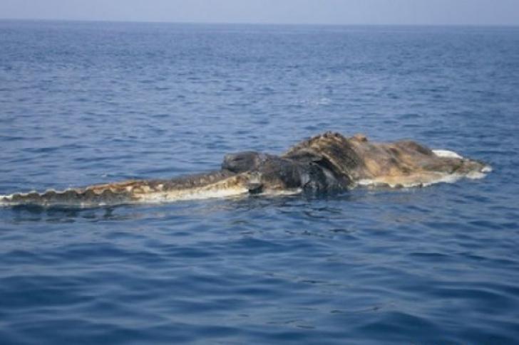 Creatura marină