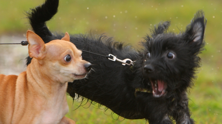 Cât de mari sunt asemănările între oameni și animale când vine vorba de comunicare