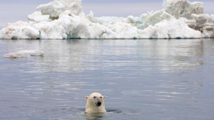 Cea mai mare problemă din Oceanul Arctic care îi îngrijorează pe oamenii de știință