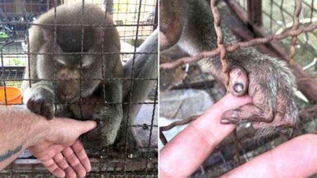 Captivă 7 ani în cușcă și chinuită, maimuța a înșfăcat mâna bărbatului. Teribil ce a urmat!