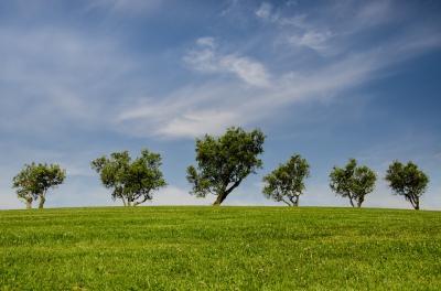 De câți copaci e nevoie pentru a reduce poluarea cu dioxid de carbon