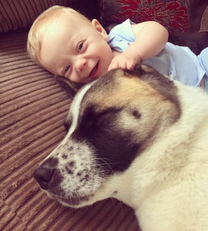 """Gravida s-a îngrijorat după ce câinele tot lătra la pântecele ei. Medic: """"Doamnă, v-a salvat viaţa"""""""