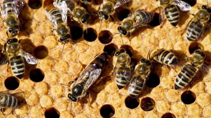 Efectele devastatoare pe care dispariția insectelor le are asupra planetei