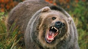 Mamă și fiică, ucise de urs. Rezultatul autopsiei a șocat și mai rău: de ce le-a atacat bestia
