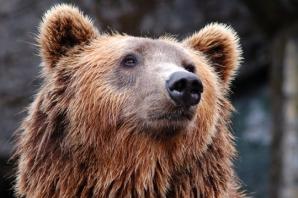 Alertă într-o comună din Harghita, din cauza unui urs