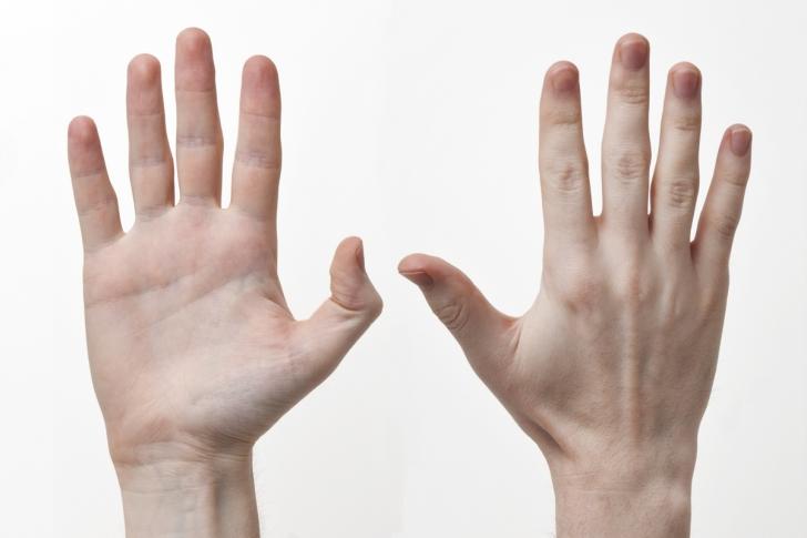 De ce degetele de la mâini au dimensiuni diferite