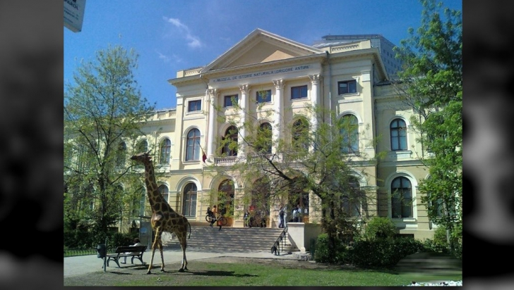 muzeula antipa