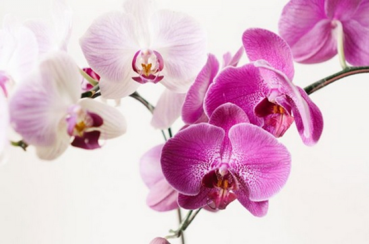 Ce faci cu tija de la orhidee după ce au căzut toate florile: o tai sau o păstrezi?