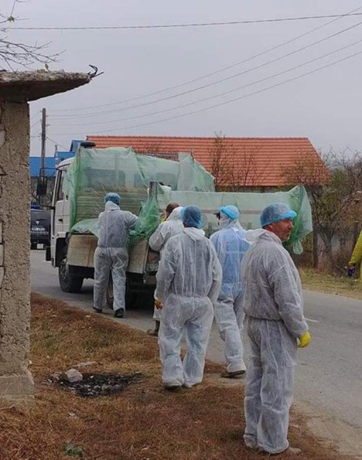 Pesta porcină face ravagii în Dolj. 62 de focare confirmate