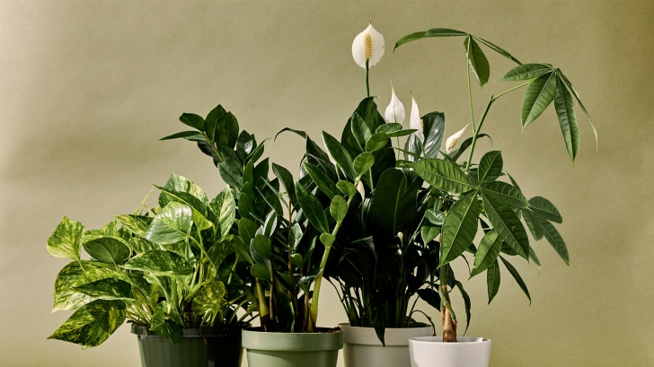 """Oamenii de stiinta au descoperit ce """"simt"""" plantele"""
