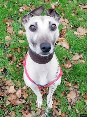 Povestea tulburătoare a câinelui care așteaptă de 900 de zile să fie adoptat