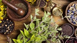 Plantele de leac potrivite pentru zodia ta. Fac minuni pentru sănătate