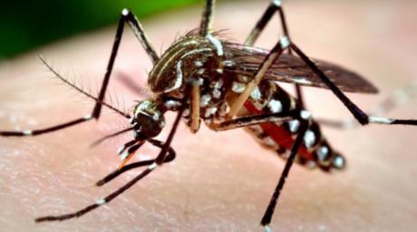 Țantarul ucigas loveste din nou! Alt deces din cauza infectiei cu virusul West Nile