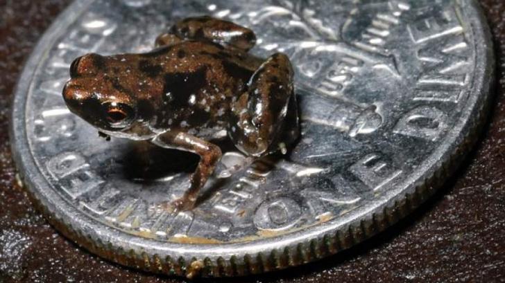 Animalele cât o monedă sunt cea mai spectaculoasă descoperire a oamenilor de știință