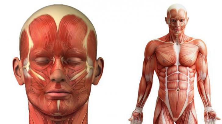 Unul dintre marile mituri despre corpul oamenilor e, în sfârșit, demontat de specialiști