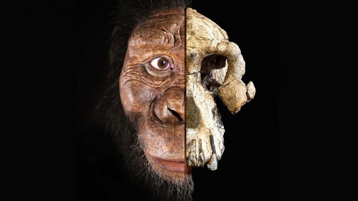 Descoperirea care intră direct în cărțile de istorie: ce schimbă acest craniu găsit în Africa?
