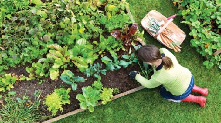 Ecoterapia: de ce plantele sunt cel mai bun tratament împotriva depresiei și a anxietății