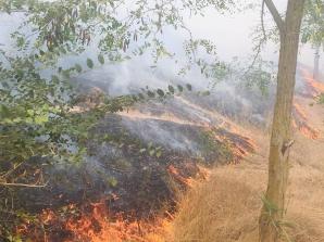 Incendiu puternic în Delta Dunării: ard 10 hectare de vegetaţie uscată