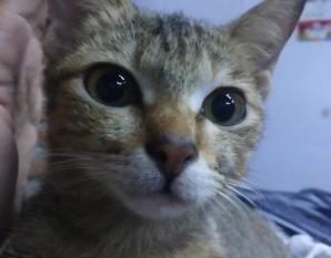 """După ce i-a ros căștile, pisicuța i-a făcut un """"cadou"""" care l-a îngrozit. Ce i-a adus în casă"""