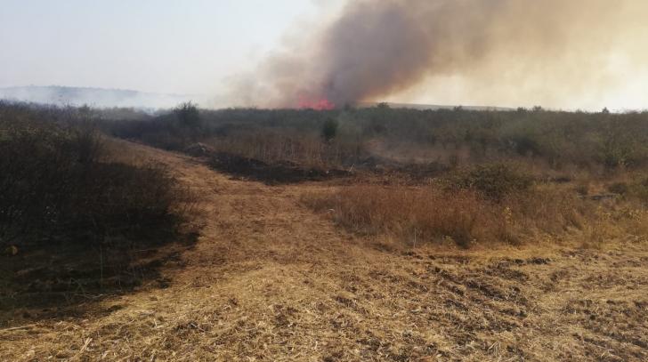 VIDEO Incendiu puternic în Dolj. Au ars 80 de hectare de arbuști și vegetație