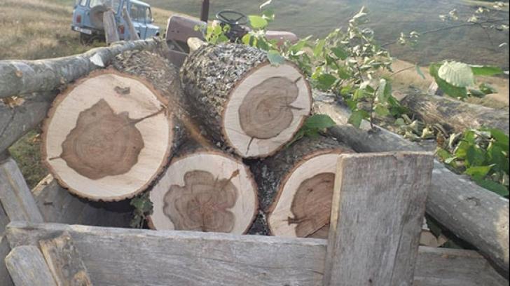 Pădurarii își cer drepturile în stradă, amenințați de hoții de lemne
