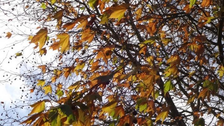 Prognoza meteo a fost revizuită. Schimbări dramatice: cum va fi vremea până pe 13 octombrie