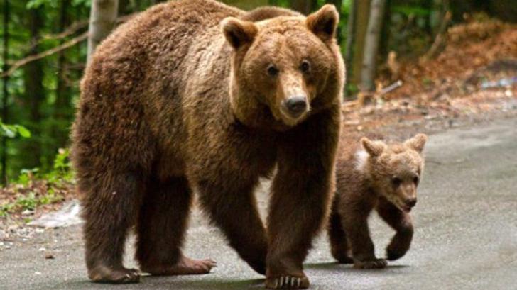 O ursoaică și puiul ei au fost împușcați după ce s-au urcat pe un submarin nuclear