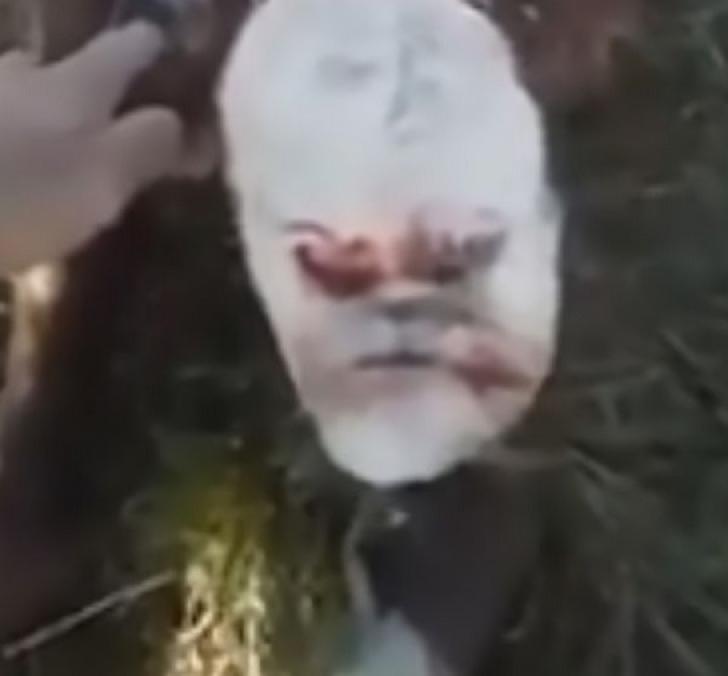 Imagini terifiante, în Argentina! Misterul vițelușului-mutant cu față de OM. Cum arată creatura