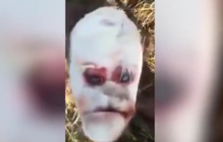 Imagini terifiante, în Argentina. Un vițeluș-mutant cu față de OM a șocat! Cum arată creatura