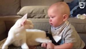 Au înghețat de spaimă când copilul a tras pisica de picioare. Ce a urmat i-a șocat pe viață!