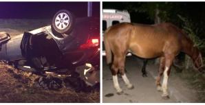 Cal lovit de mașină