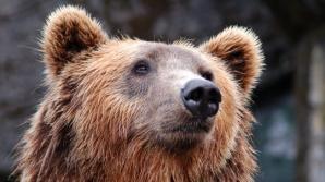 Tragedie în Mureș: un bărbat a murit, după ce a fost atacat de urs. Animalul, în libertate