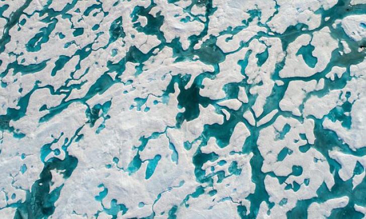 Dacă vezi ursul pe aceste calote glaciare, ai IQ-ul cu mult peste medie