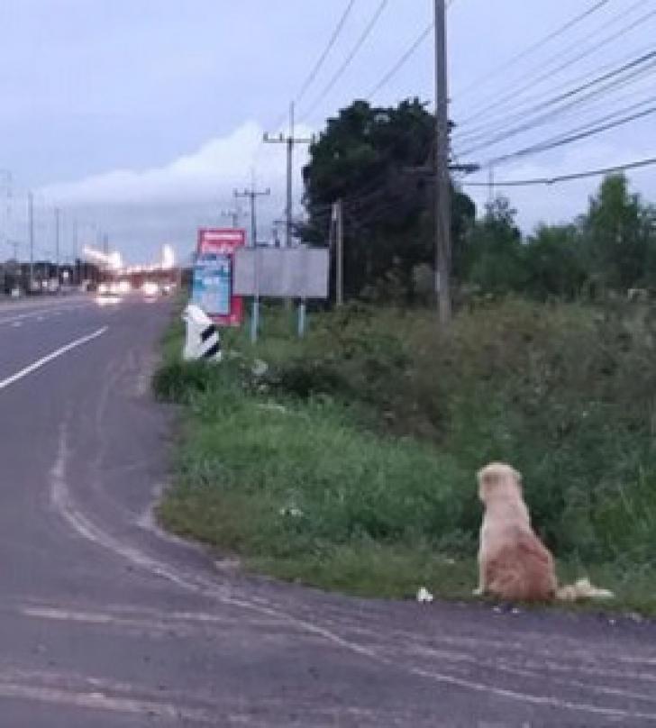 <p>Un câine pierdut și-a așteptat stăpânii să se întoarcă, în același loc, 4 ani. La regăsire, a șocat!</p>