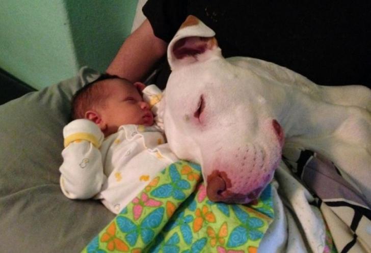Şi-au lăsat copilul singur cu câinii şi au încuiat uşa. Când s-au întors, părinţii au găsit asta