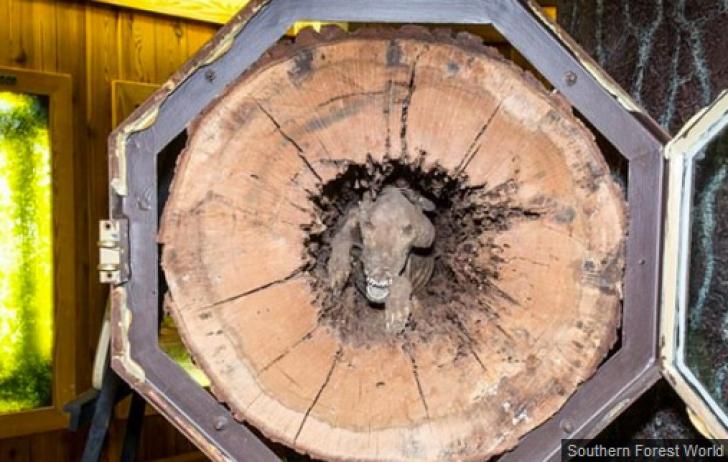 <p>Când au tăiat copacul, le-a înghețat sângele în vene. Ce au găsit înăuntru i-a șocat</p>