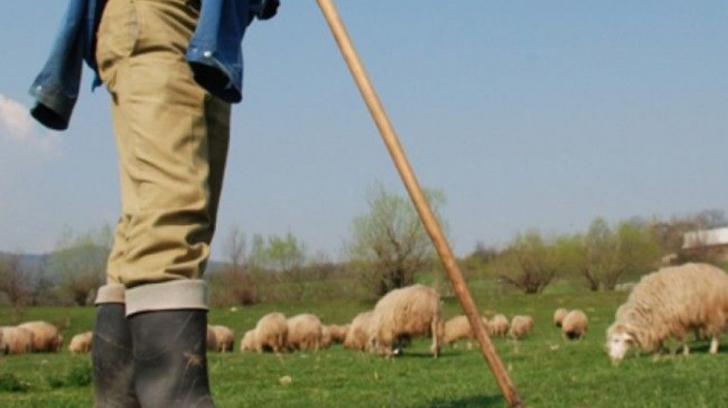 Cioban bătut crunt la o stână din munții Făgăraș