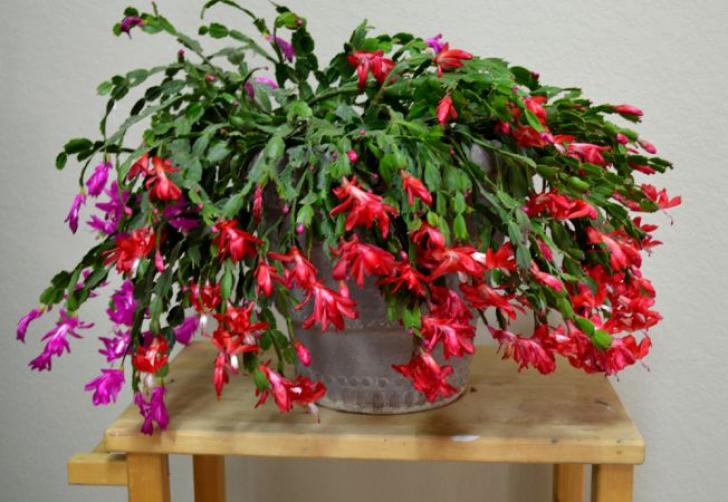 Top 5 plante de apartament rezistente