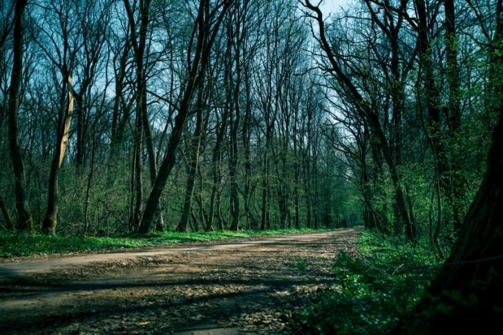 Scandalul Pădurea Băneasa. Primăria Capitalei face precizări