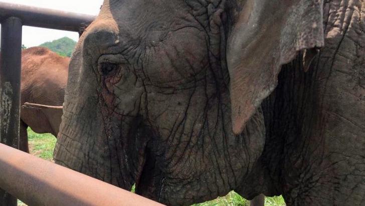 Elefantul Ramba