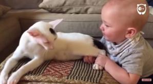 Au înlemnit de spaimă când copilul a tras pisica de picioare. Ce a urmat i-a șocat pe viață!