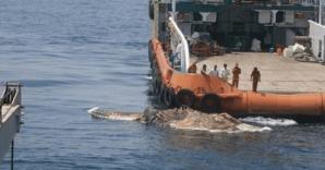 <p>Terifiant! Marinarii au scos din adâncuri o creatură misterioasă. Au îngheţat de spaimă! Ce era</p>