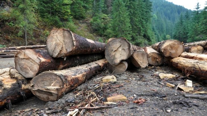 Cât s-a tăiat și cât s-a regenerat din pădurile județului Covasna