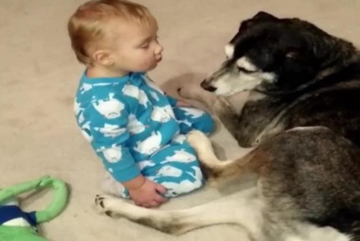 Şi-au lăsat copilul singur cu câinii şi au închis uşa. Când s-au întors, părinţii au primit șocul