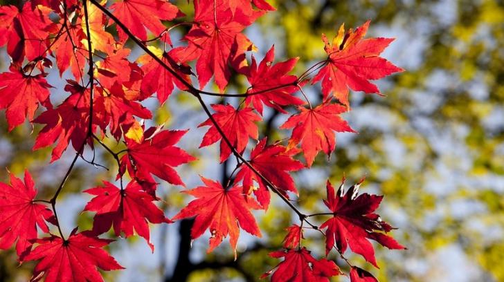 Prognoza meteo a fost revizuită. Schimbări dramatice: cum va fi vremea până pe 24 noiembrie