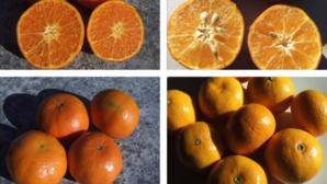 diferenta dintre mandarine si clementine