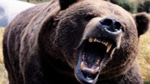 Alertă într-o localitate din Harghita, din cauza unui urs. Avertizare RO-ALERT