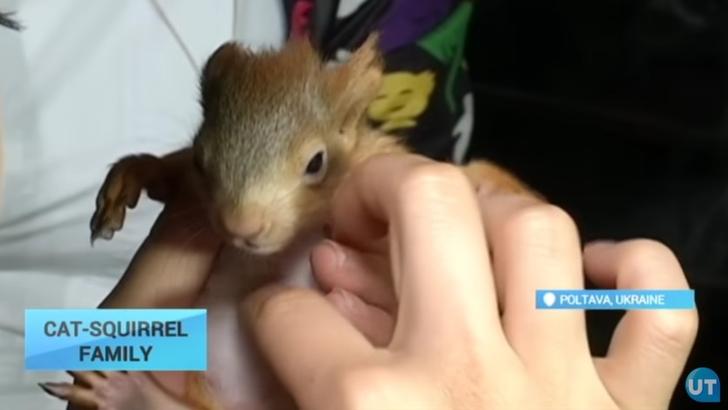 Imagini adorabile! O pisicuță a adoptat doi pui de veveriță